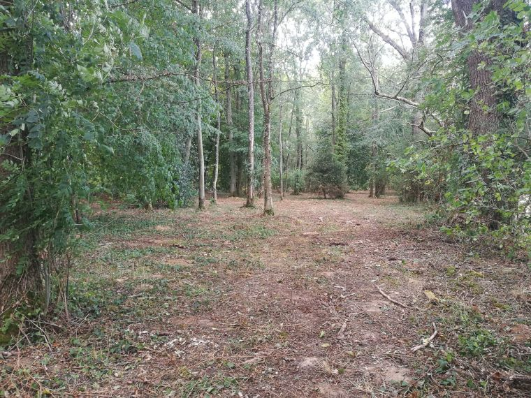 Senlisse forest 2